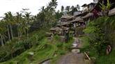 Bali: Rijstterrassen (Tegalalang)